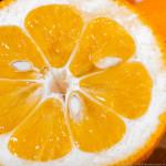 Orange Mamalade 9