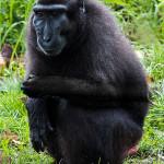 25 Durrell wildlife park